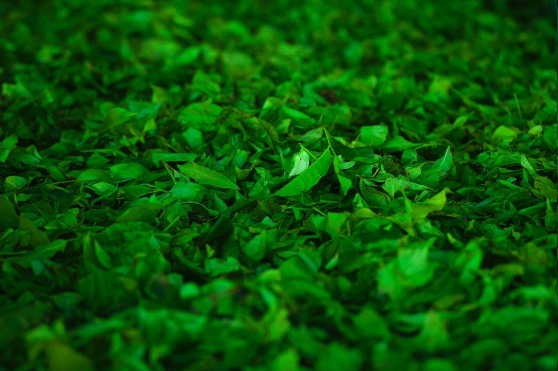 Green Agriculture Blurred