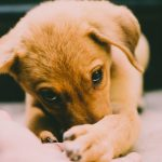 Selecting The Best Bed For Your New Puppy – Its Essence