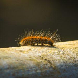 Caterpillar Close Up 300×300