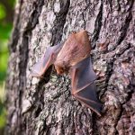 Reasons To Call A Trustworthy Bat Removal Services ASAP – General Tips To Follow